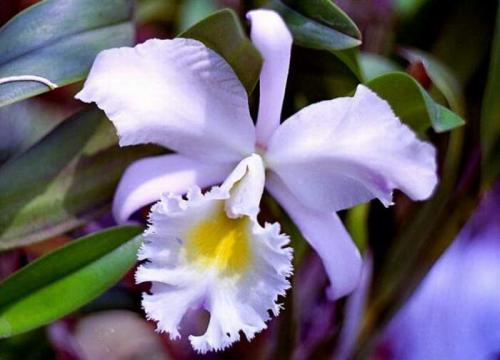 орхидеи цветы картинки